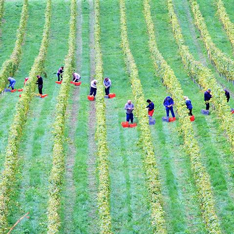 gestione operatori agrari, ferie permessi giorni di lavoro